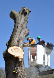 tree service best tampa