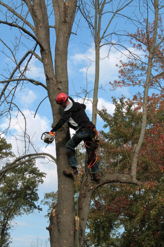 emergency tree removal tampa