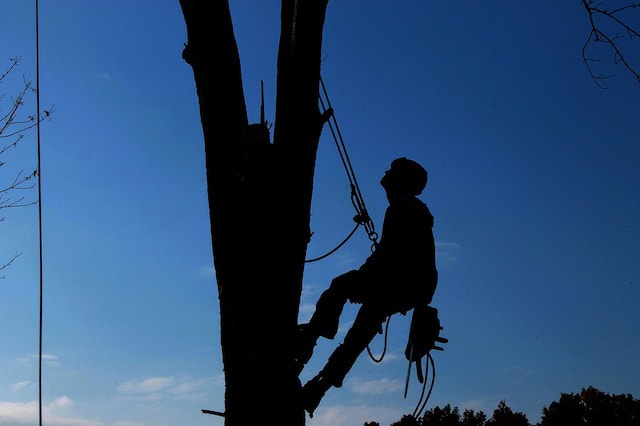 Qualified Tree Service Technician Pasco County FL