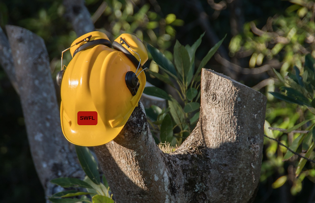 Stump Grinding Tree Services Spring Hill FL