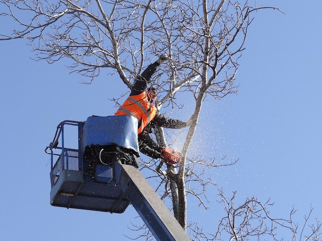 Tree Service Commercial Pasco County FL