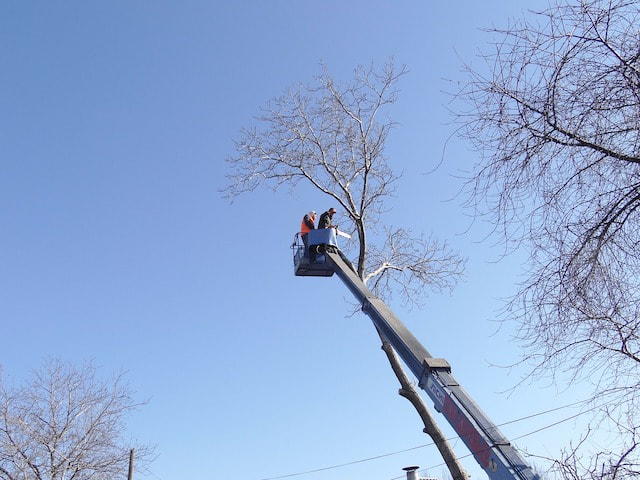 Tree Service Spring Hill FL 11